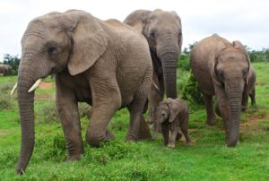 elephant family at a picture