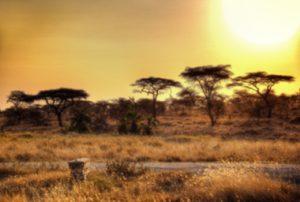 Afrika bei Sonnenuntergang
